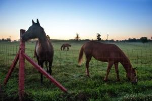 6-14-13_horses